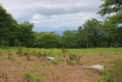 明神岳1432m ヒキウス平    三重県_d0055236_16203474.jpg