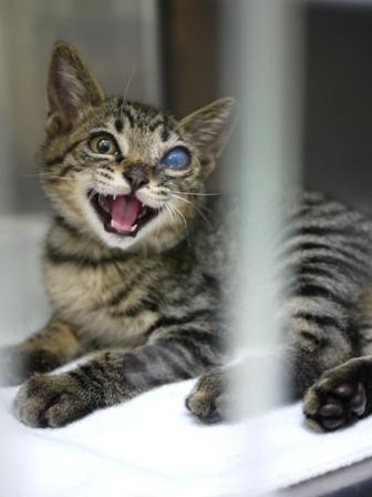そと猫のお友だち しましまくん退院編。_a0143140_22534041.jpg