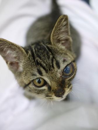 そと猫のお友だち しましまくん退院編。_a0143140_22555870.jpg