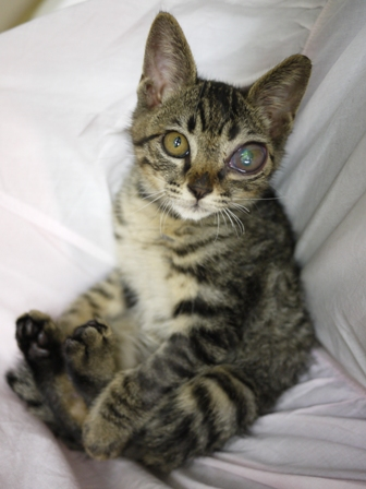 そと猫のお友だち しましまくん退院編。_a0143140_22593198.jpg