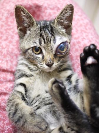 そと猫のお友だち しましまくん退院編。_a0143140_2322799.jpg