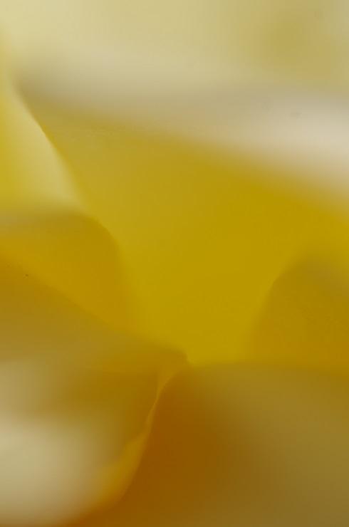 d0165741_10122374.jpg