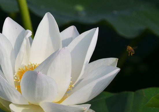 花はす(1)_c0093046_6443998.jpg