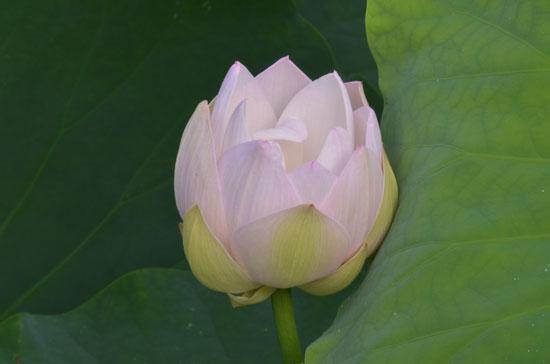 花はす(1)_c0093046_645134.jpg