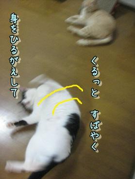 b0151748_1252328.jpg