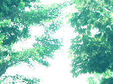 今日、蝉が鳴きました!_d0129249_15504022.jpg