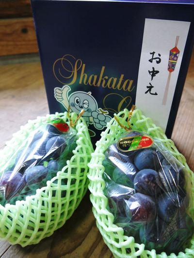 熊本ぶどう 社方園 平成25年度、豪華ラインナップでまもなく初出荷!!_a0254656_16562564.jpg