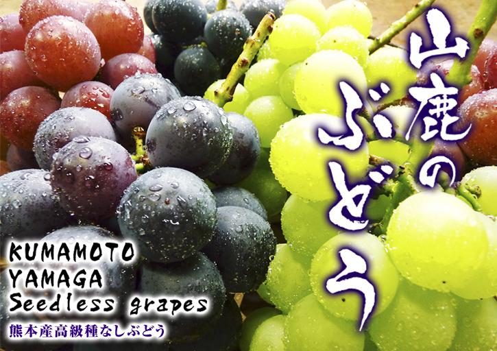 熊本ぶどう 社方園 平成25年度、豪華ラインナップでまもなく初出荷!!_a0254656_17344160.jpg