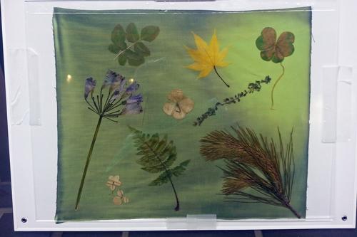 植物青写真 太陽の光でオリジナル手ぬぐいとポストカードを作ろう! サイアノタイプ_f0117059_22445294.jpg