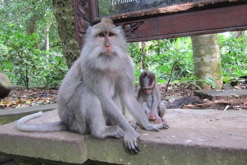 Bali-11._c0153966_17502535.jpg
