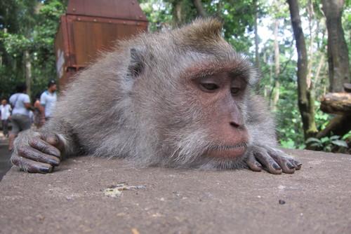 Bali-11._c0153966_1751265.jpg