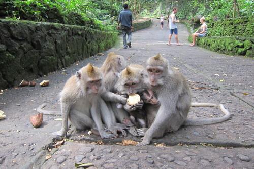 Bali-11._c0153966_17574029.jpg