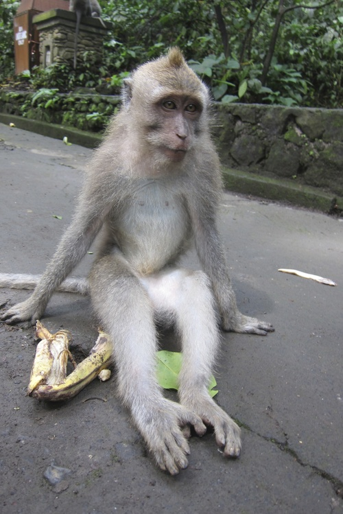 Bali-11._c0153966_17582863.jpg