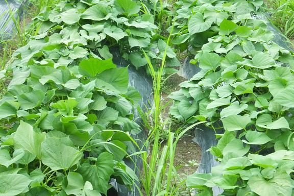 私たちの食を支えてくれている農家さん_e0272869_0174720.jpg