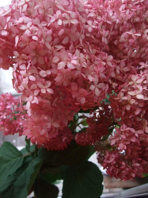 オークリーフ(バラと野苺のある風景)_f0049672_16514324.jpg