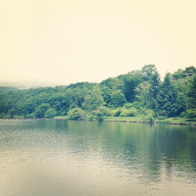 湖と鳥。_d0028589_17491450.jpg