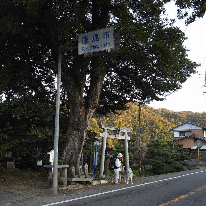 Memory of the second pilgrimage with husky HANA_c0049299_12471142.jpg