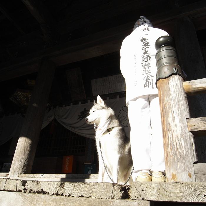 Memory of the second pilgrimage with husky HANA_c0049299_12594914.jpg