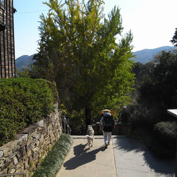 Memory of the second pilgrimage with husky HANA_c0049299_13162677.jpg