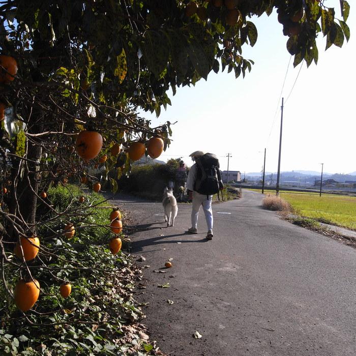 Memory of the second pilgrimage with husky HANA_c0049299_1332365.jpg