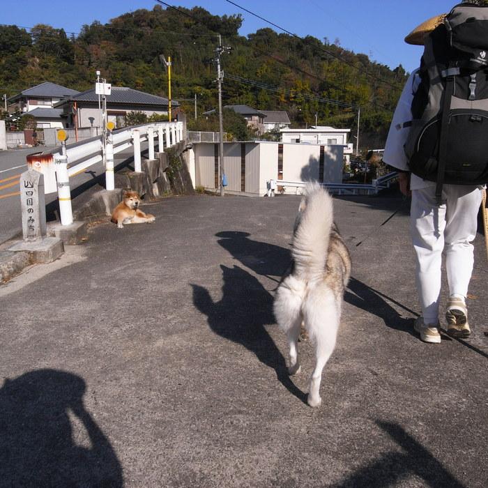 Memory of the second pilgrimage with husky HANA_c0049299_1382060.jpg