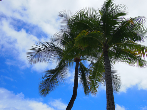 ハワイ♪ モアナ サーフライダー ウェスティン リゾート&スパ_e0154202_22164712.jpg