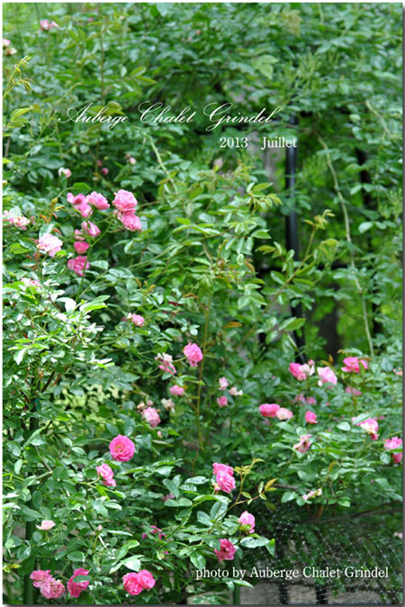 本日のシャレーグリンデル ガーデン_d0109415_16362857.jpg