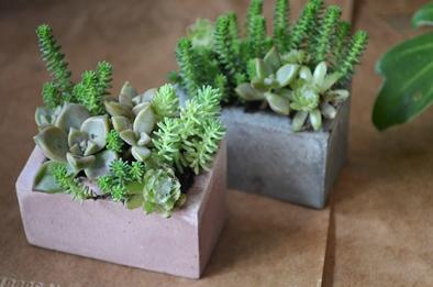 盆栽とmoss house 新入荷ご案内_d0263815_15124679.jpg