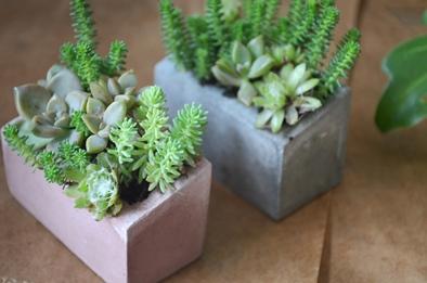 盆栽とmoss house 新入荷ご案内_d0263815_1513143.jpg