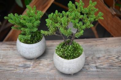 盆栽とmoss house 新入荷ご案内_d0263815_15163772.jpg