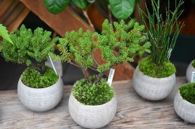 盆栽とmoss house 新入荷ご案内_d0263815_1533165.jpg