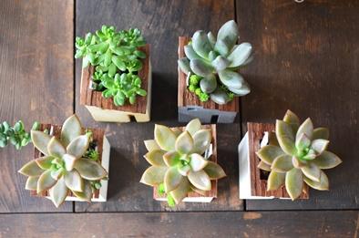 盆栽とmoss house 新入荷ご案内_d0263815_1582351.jpg