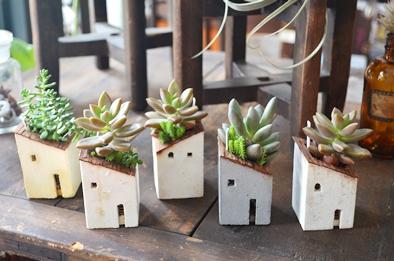 盆栽とmoss house 新入荷ご案内_d0263815_158870.jpg