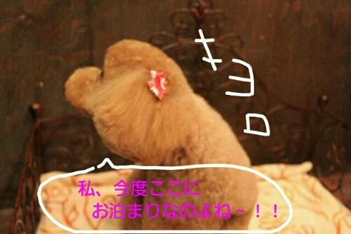b0130018_20123538.jpg