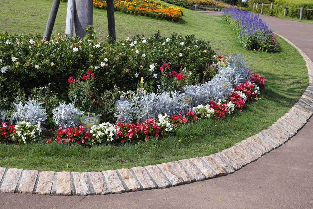 キンギョソウ、ルドベキア、シロタエギク、、、初夏のお花たちをシグマ望遠、マクロレンズ達で楽しむ_c0223825_11541764.jpg