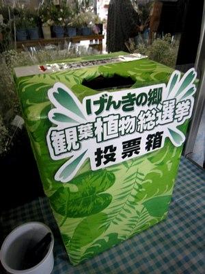 観葉植物総選挙!_c0141652_1929026.jpg