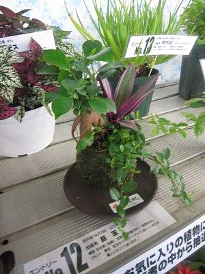 観葉植物総選挙!_c0141652_1929124.jpg