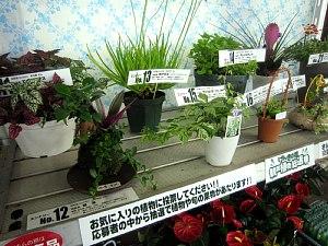 観葉植物総選挙!_c0141652_19291369.jpg