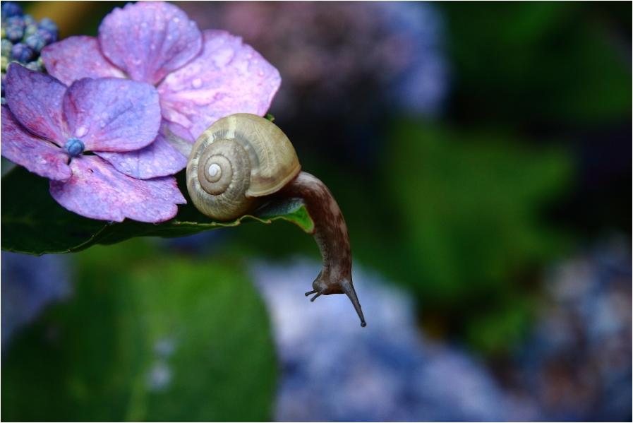 『雨が良く似合う花』_a0253273_9171494.jpg