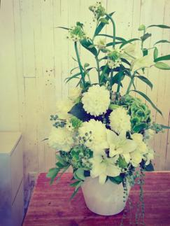 lily flower_b0209477_1615822.jpg