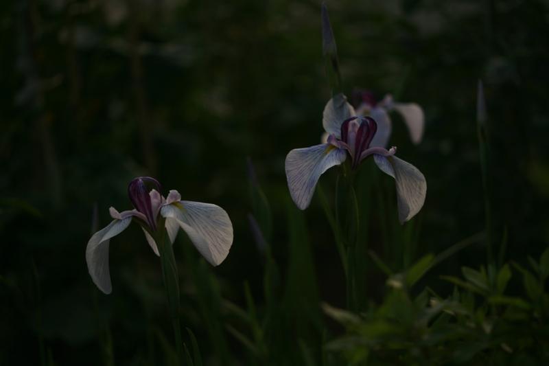 夕方の光の中で_f0126483_20114525.jpg