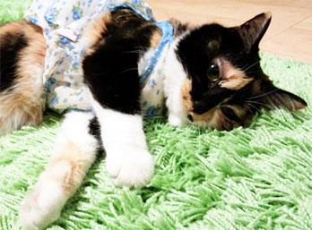赤ちゃんも安心『クルチアーニ』の可愛いブレス♪_d0224894_1521286.jpg