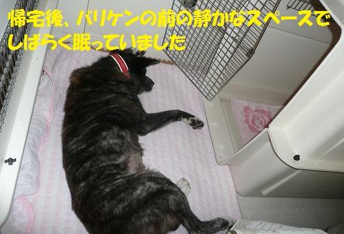 f0121712_10141543.jpg