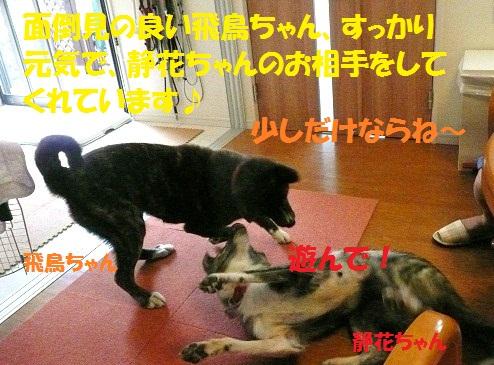 f0121712_1043369.jpg