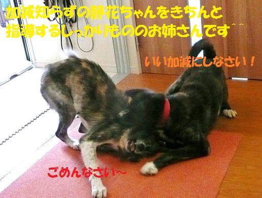 f0121712_10434455.jpg