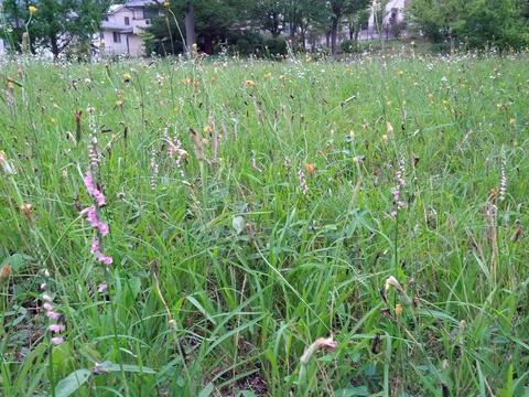 公園の草花たちは元気です!_e0184224_100034.jpg