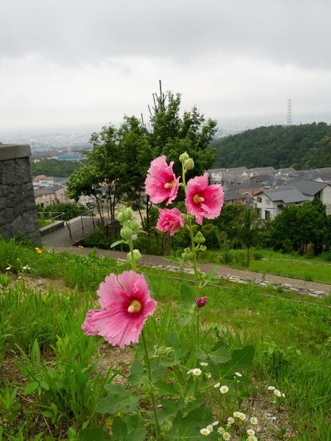 公園の草花たちは元気です!_e0184224_1004263.jpg