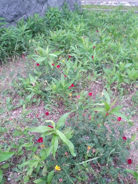 公園の草花たちは元気です!_e0184224_1025443.jpg
