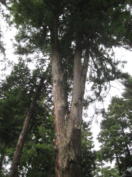 金桜神社。_b0135325_1711145.jpg