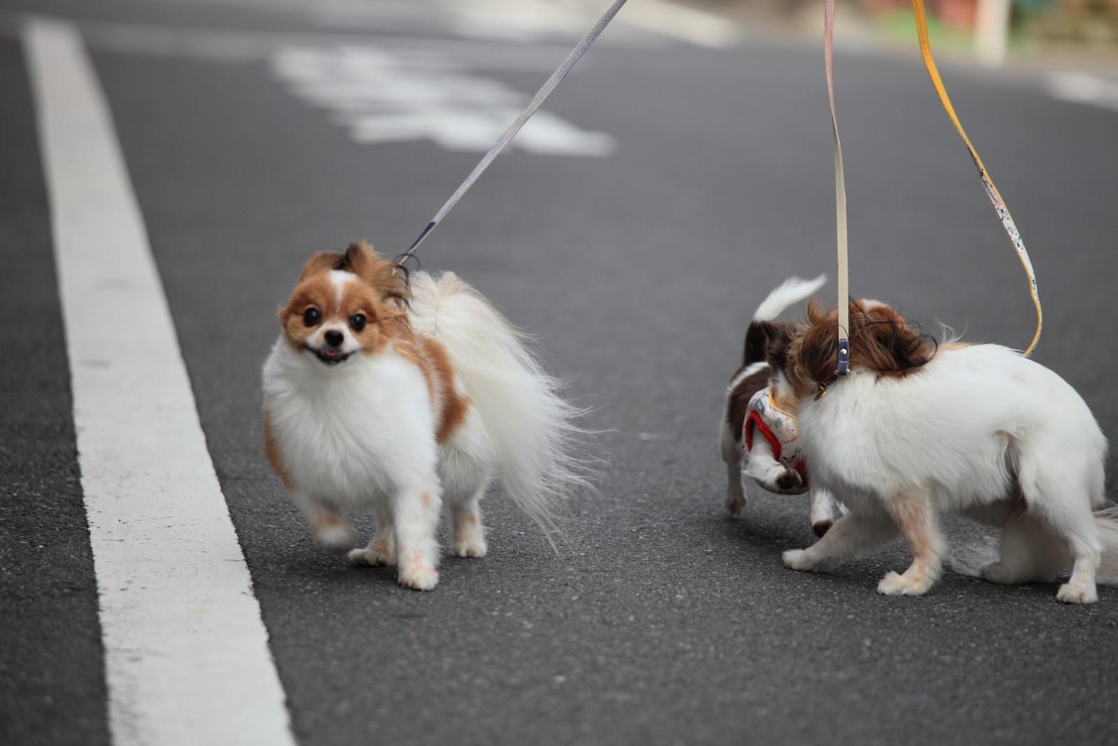 初散歩リベンジ_a0027126_2154481.jpg